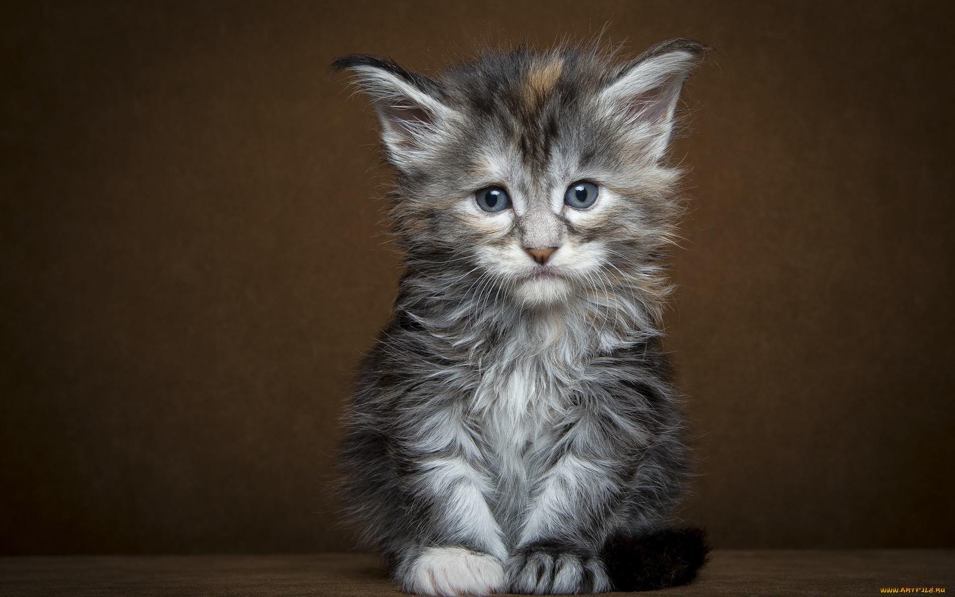 самки всех фото грустные котята юлаев был известен